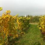 Und schwups: der Herbst ist wieder da und die Ernste ist eingefahren...