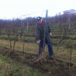 Professionelle Hilfe gerne willkommen: mein Bruder Wolfgang von der Pelee Island Winery, Ontario